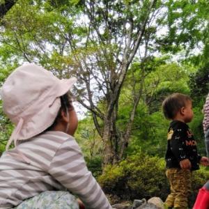 【10/9(金)おさんぽ会募集】~ひみつの森でおもいっきり遊ぼう~