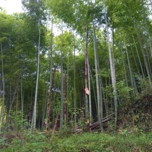 5/11 やっぱり、森はおもしろい(親子組・さやまめ)