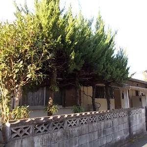 県外からご依頼いただき小郡市三沢のご実家の伐採、枝おろしをしました。