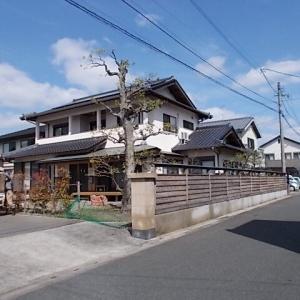 鳥栖市藤木町で大きなモチノキ、モミジ、カシを剪定しました。