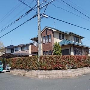 久留米市宮ノ陣でコニファー、ヤマボウシ、モミジ、レッドロビンの生垣を剪定しました。