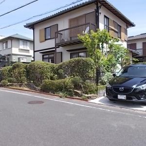 筑紫野市光が丘でマツ、モミジ、ヒイラギモクセイの生垣を剪定しました。