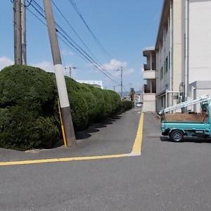 大刀洗町でカイズカ、サザンカの生垣を剪定しました。