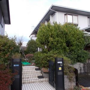 筑紫野市美しが丘北でコニファー、キンモクセイ、マキ、ゴヨウマツ、サザンカの生垣を剪定しました。