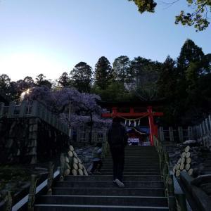 """桜を見に行って来ましたー""""(ノ*>∀<)ノ"""