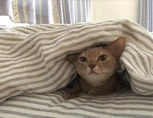 寒いから布団にもぐっちゃうよ