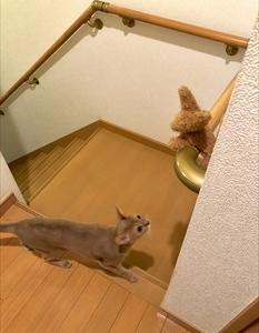 猫の挑戦1