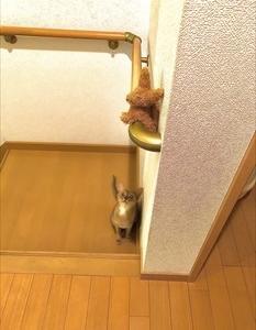 猫の挑戦2