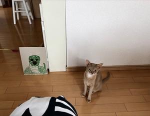 エクソシスト猫