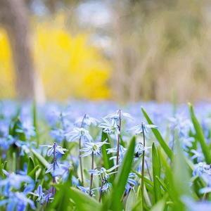 今週は春らしく不安定な1週間(10日・11日・22日はお休みをいただきます)