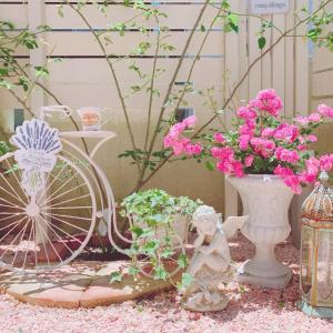 お庭に新しいバラ