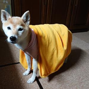パジャマと毛布 始めました