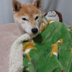 好き好き毛布