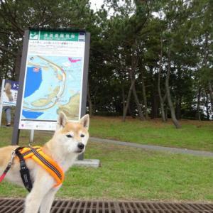海の公園で短めお散歩