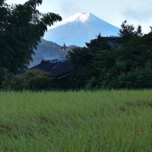 富士山初冠雪だよ〜チワワ 部屋の冬支度
