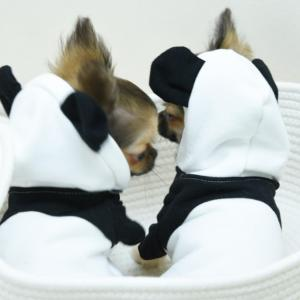 双子のパンダちゃん、お誕生おめでとう!