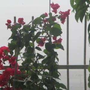 眼の異常? 一瞬思った 霧の朝