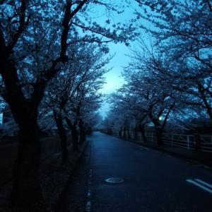 桜とちゃこ