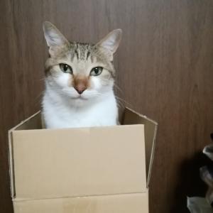 箱もいいけど