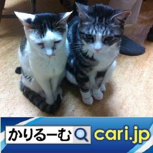 メーカーや企業と協力しつつ大きな輪を広げよう cari.jp