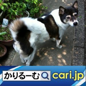 今更ながら親孝行をしようと思っています cari.jp