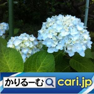 2020年7月分 鈴木社長の日記・日誌・備忘 cari.jp