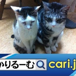 2020年8月分 広報・記事等 cari.jp