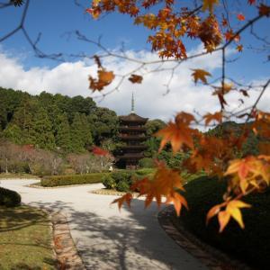 九州・山口のいろんな紅葉