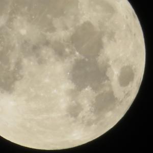 満月です。