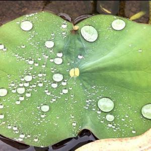 雨上がりの水曜日のレッスン♡