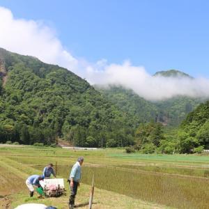 酒米の田植え