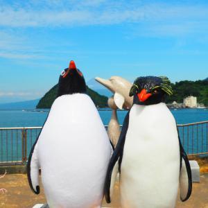 Vol.1862~キャプテン(ジェンツーペンギン)&ロッキー(イワトビペンギン)@伊豆・三津シーパラダイス