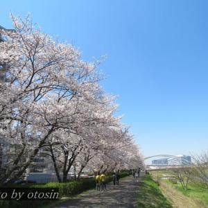 散歩写真(4月4日_春の自然公園)