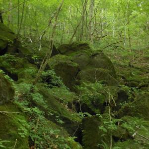女の川ルートは緑の空間---筑波山