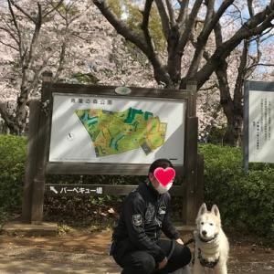 お花見散歩2019.4