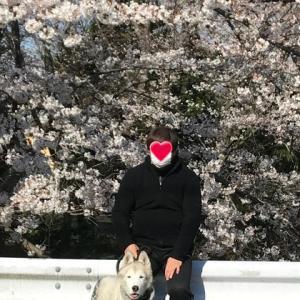 お花見ネタ、続きます(^^♪