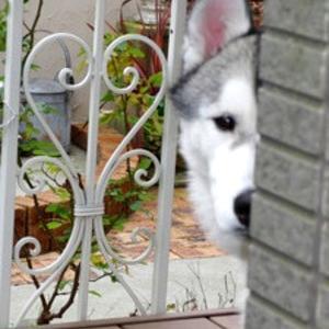 「#家政婦は見た犬」