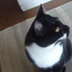 猫も落ち着け。〈白滴 純米吟醸〉