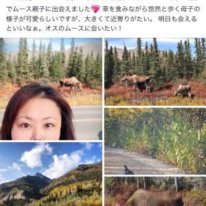 アラスカ:メディスンアニマルの旅(速報3)