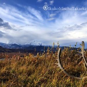 アラスカ:メディスンアニマルの旅(速報5)