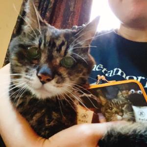 がま口100本ノック《猫様のがま口を作ってもらった》
