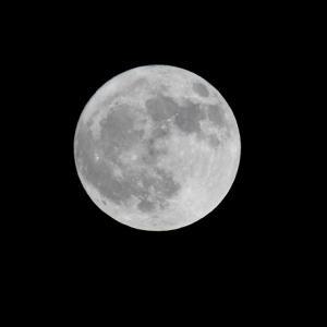 お月さまを愛でよう