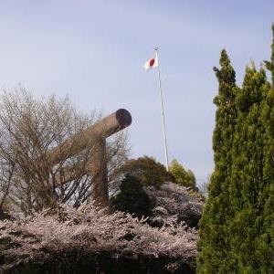 千鳥ヶ淵 桜 2011