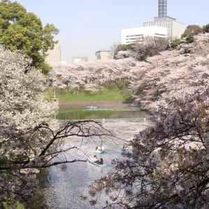 千鳥ヶ淵 お濠の桜