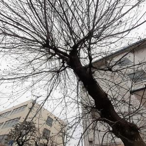 経過観察をしてようやくわかった木 <お花で一休み(57)>