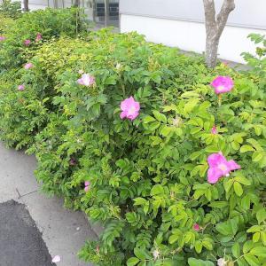 道の花 <お花で一休み(65)>