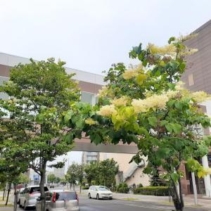 ライラックの仲間の木 <お花で一休み(77)>