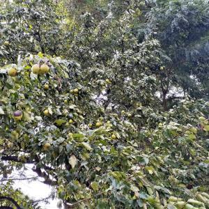 札幌・街の一コマ : 秋の実り
