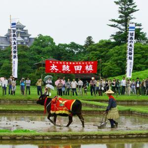 2011年 御田植祭より