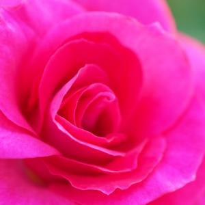 10/26 今日のhappyメッセージ「周りに愛を」